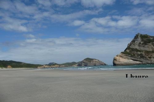 Mammifères Marins Nouvelle-Zélande ,khanel3