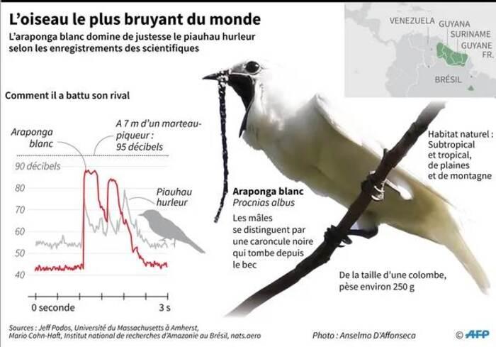 L'araponga blanc est l'oiseau le plus bruyant du monde