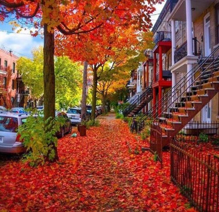 automne a Montreal