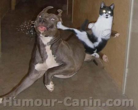 Chien et chat.