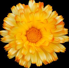 Spécial Automne - tubes thème fleurs d'Automne