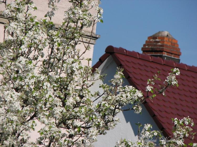 Ciel d'Alsace 310