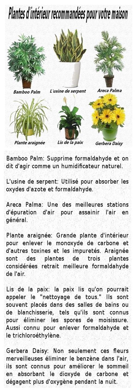 Les plantes d'intérieures