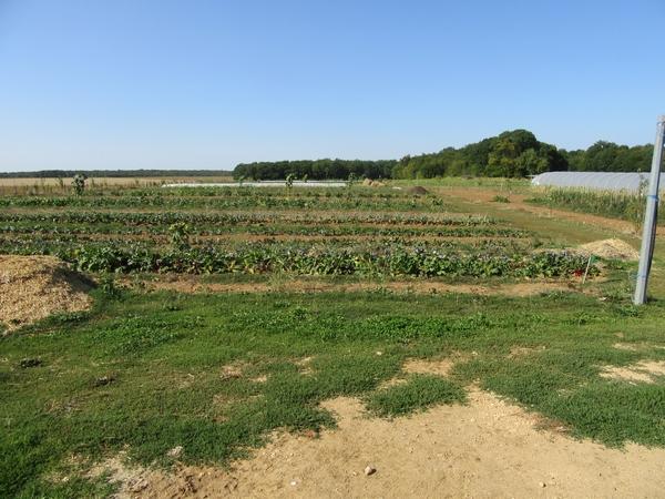 Le potager de la Borde de Chemin d'Aisey