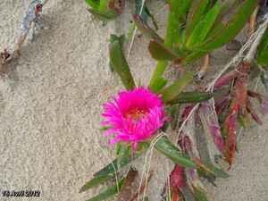 (J12) Liendo (Hazas) / Santona 16 Avril 2012 ( Puntal Santona)