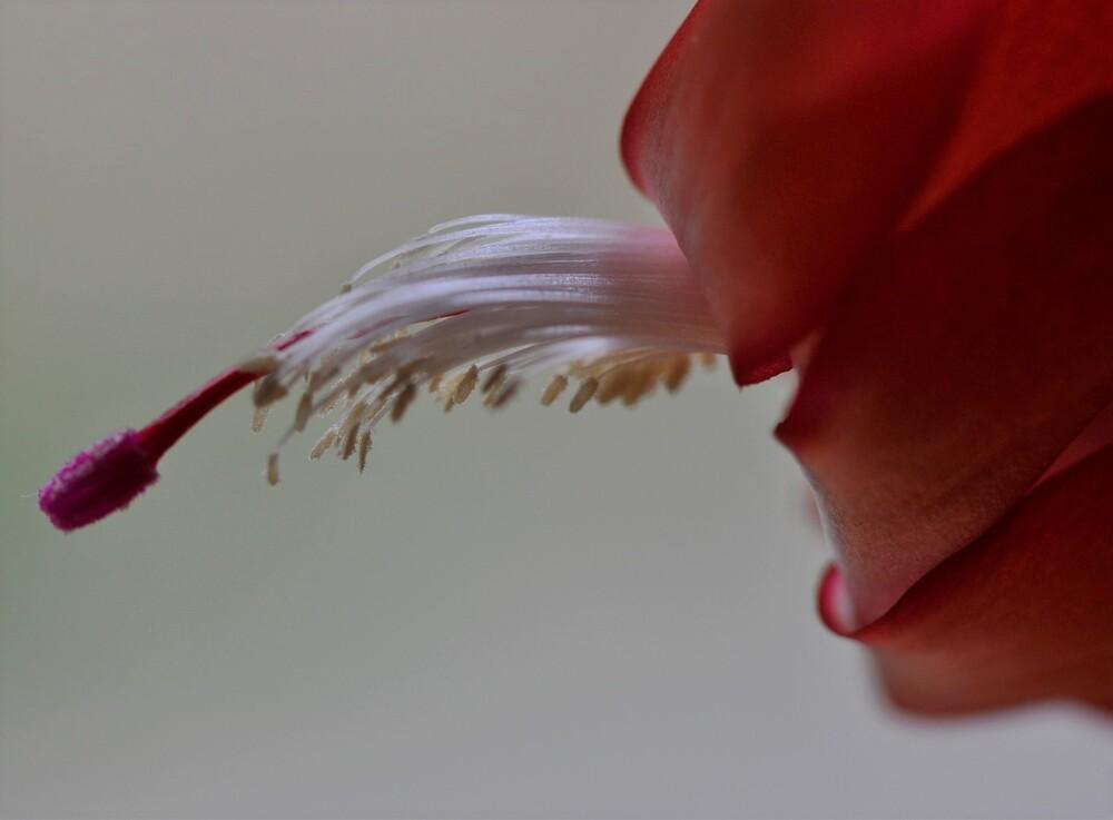 Juste une fleur