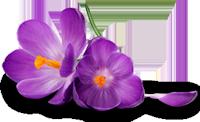 *** Love Purple ***