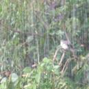 Sous la pluie - Photo : Bobnad
