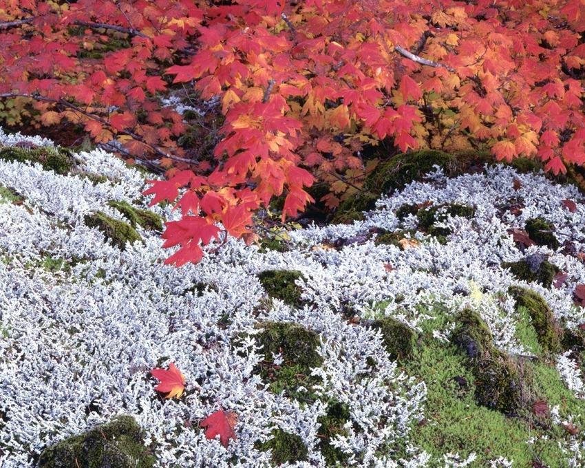5 images d'automne