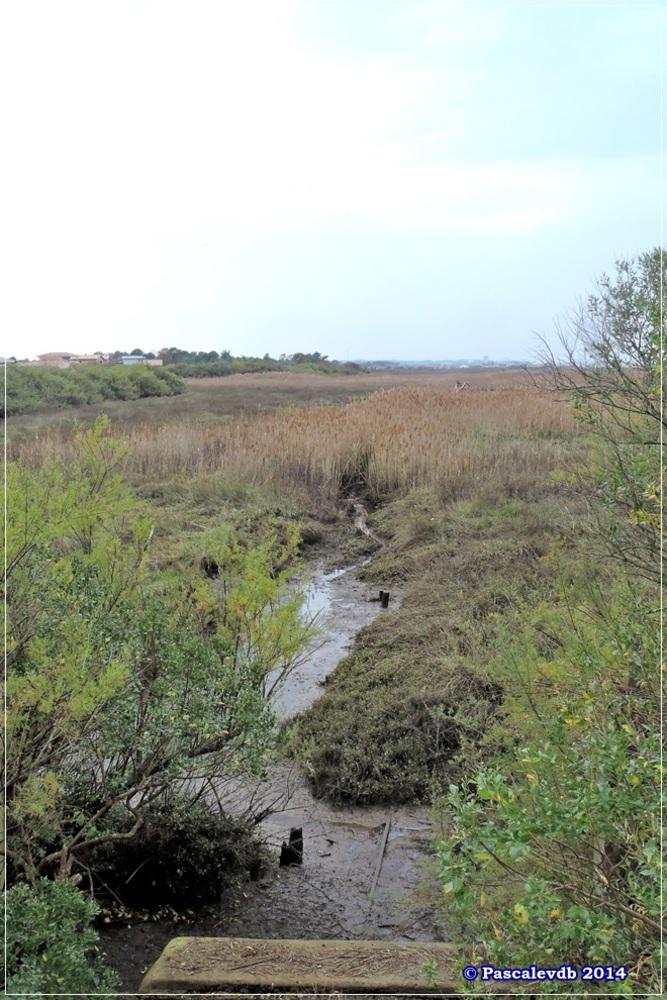 Sur le sentier du littoral de Gujan Mestras à La Hume - 2/4
