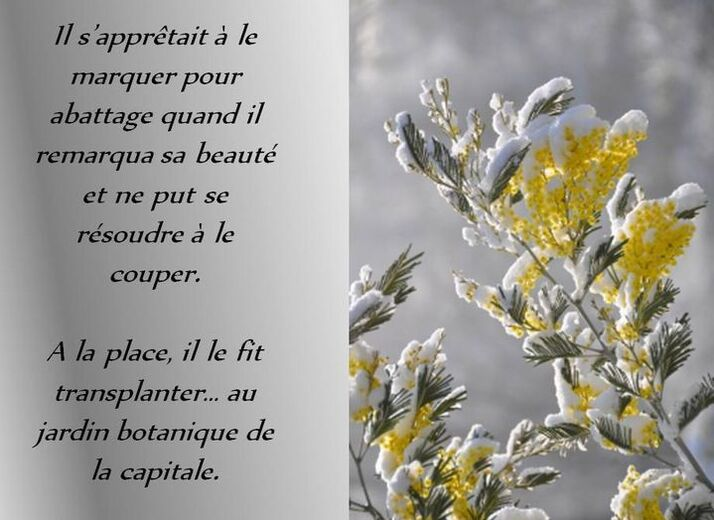 Un bel arbuste...