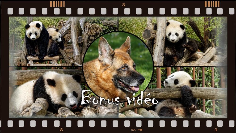 Tian Bao, première vidéo de l'année