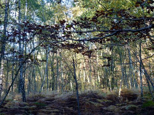 La forêt, encore...