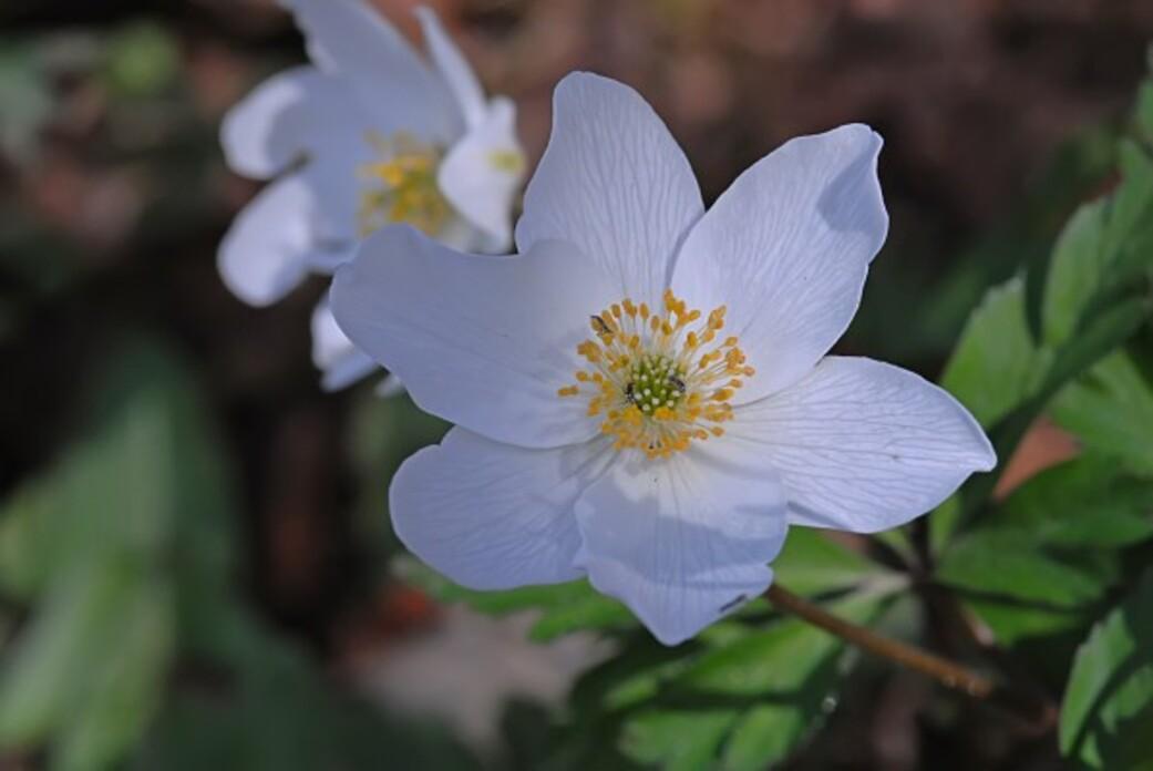 Fleurs-12-0414_modifie-1.jpg