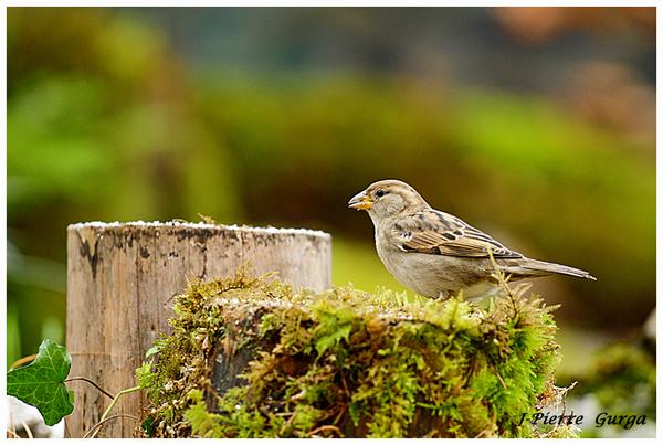 D'autres très belles photos d'oiseaux par Jean-Pierre Gurga...