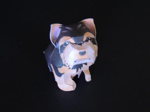 Le chien et la boite cadeaux