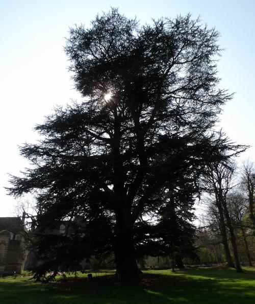 Le château de Selles-sur-Cher