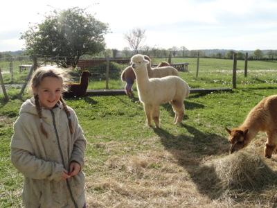 Blog de melimelodesptitsblanpain : Méli Mélo des p'tits Blanpain!, Les Alpagas du Quercy!