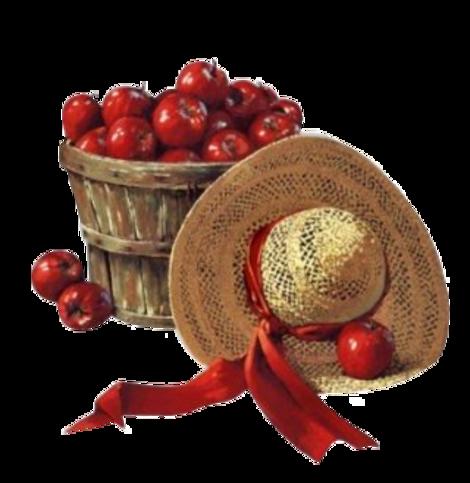Octobre, récolte des pommes.