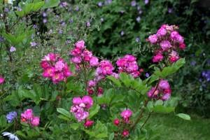 Princesse-Violette-copie-2.jpg