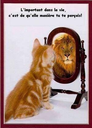 Briser Un Miroir, Regard Sur Un Autre Monde...