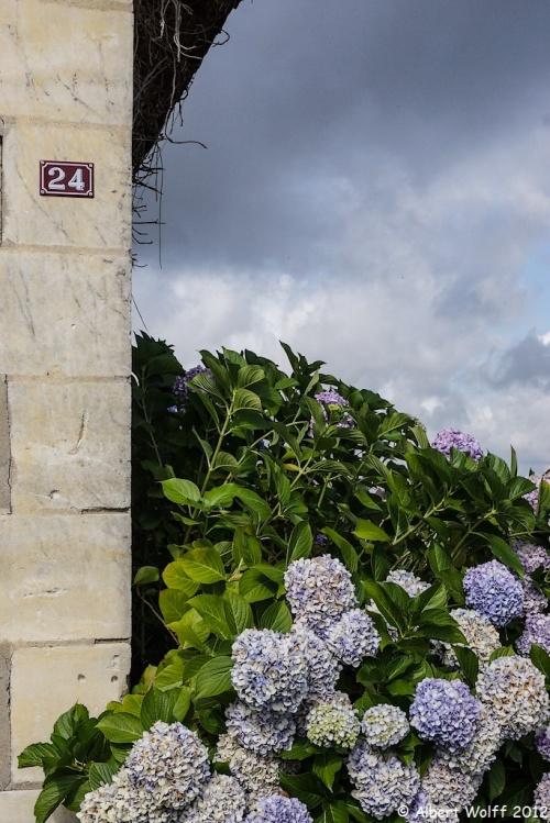 Les fleurs de mes vacances  2012 (part 4)
