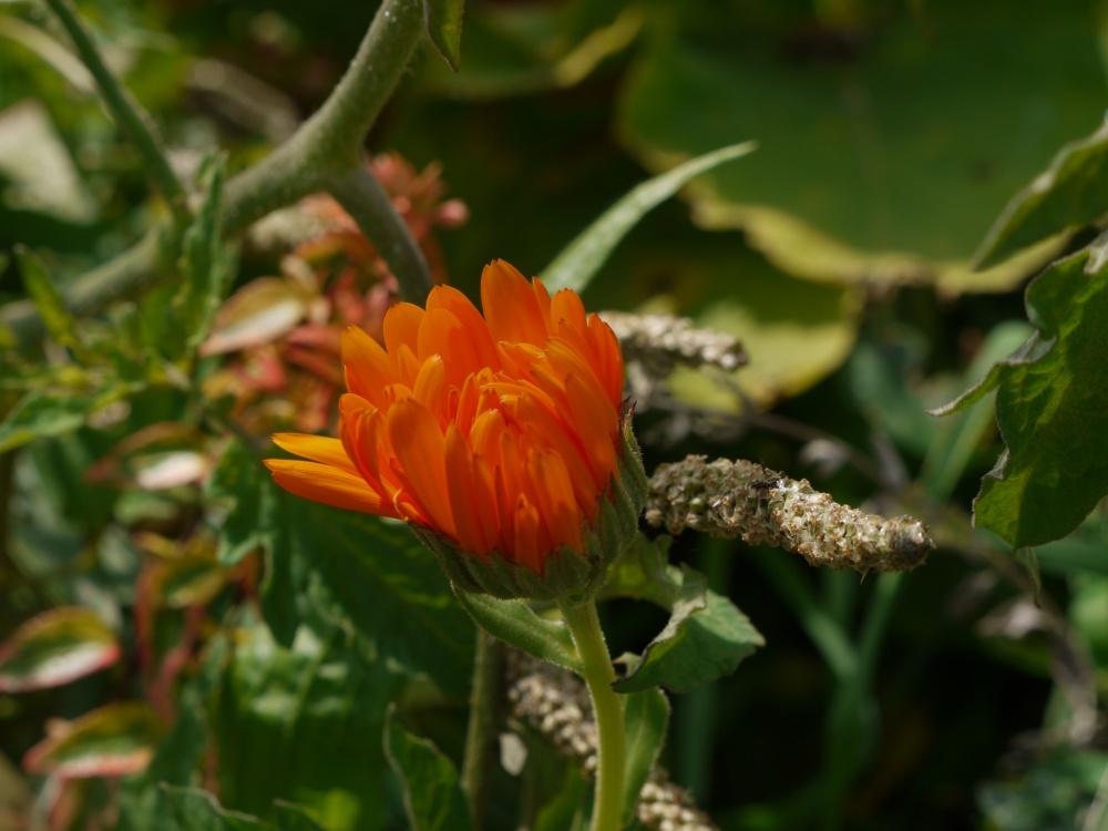 Ce matin au jardin