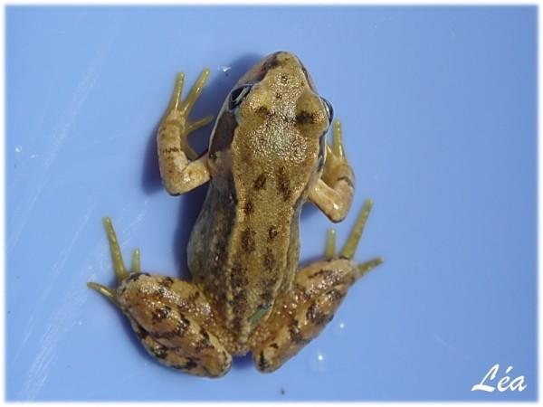 P6123949-grenouille.jpg