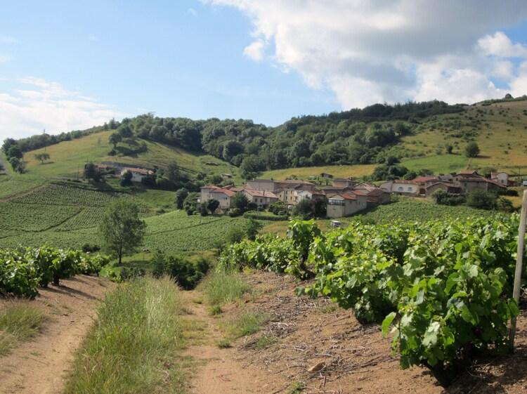 Les vignes Vaux en Beaujolais