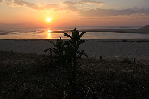 couchers-de-soleil-landais 3580