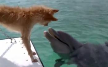 Un chien sauvé par un dauphin