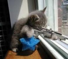 les chats avec un flingue