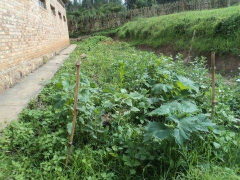 plantations permacultures :octobre nos potagers!