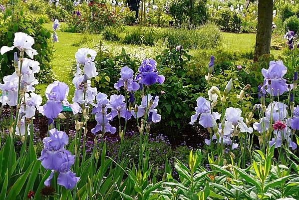 Giverny--Iris-31-mai-2010--Pan-226.jpg