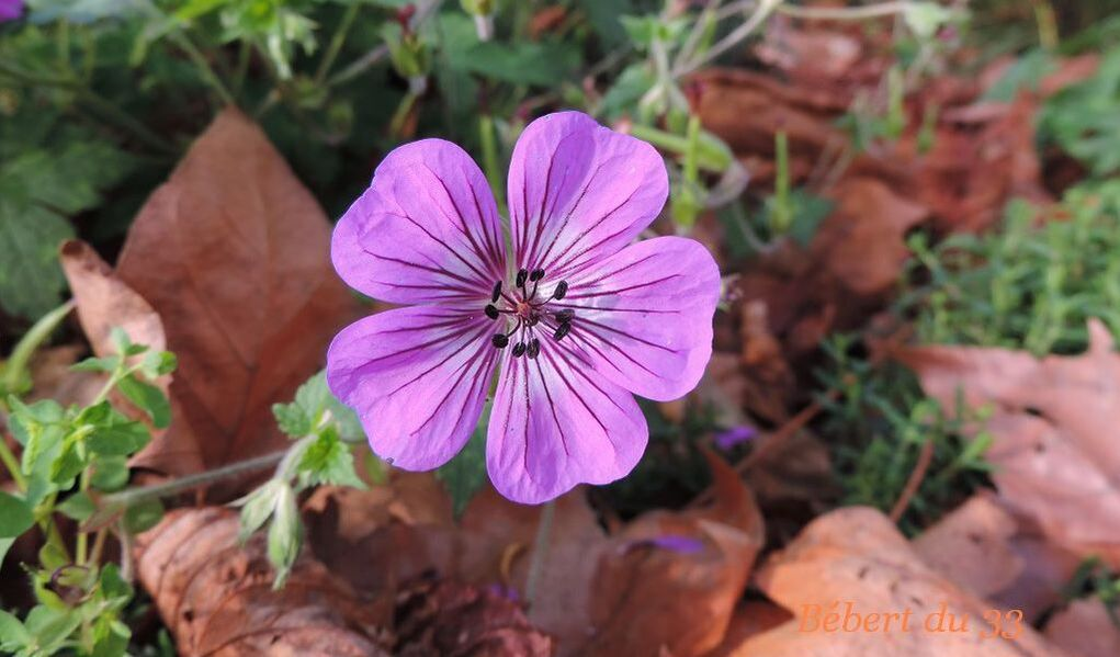 une fleur pour le week-end