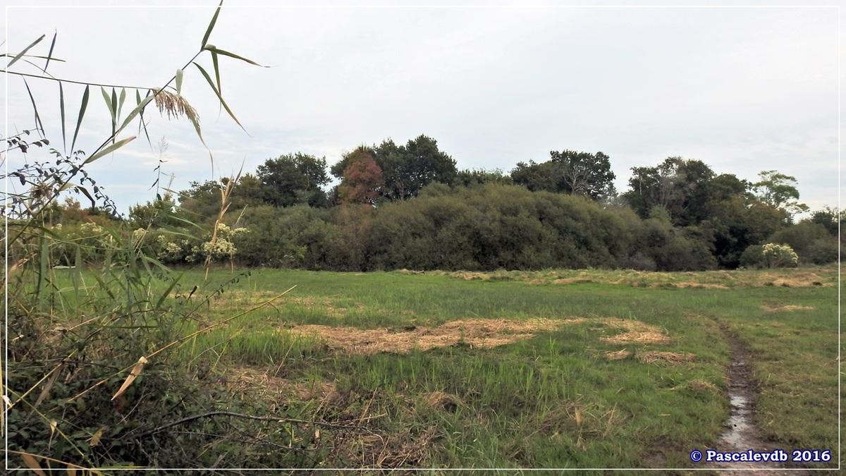 Plaines du Teich et domaine de Fleury - Octobre 2016 - 10/13