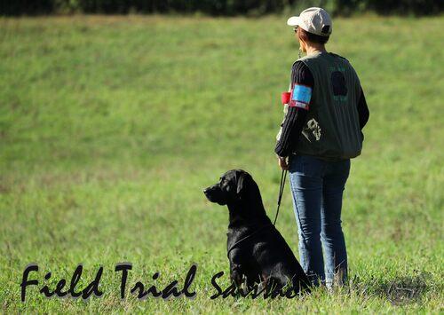 Field trial Saissac (suite)