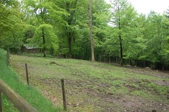 Parc animalier Bouillon 2013 enclos 128