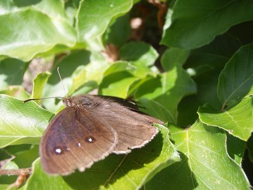D'autres papillons