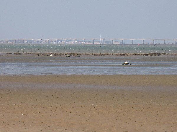 zoom sur le pont d'oléron depuis la plage de ronce les bai