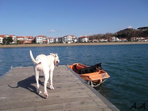 Walky dog sous le soleil