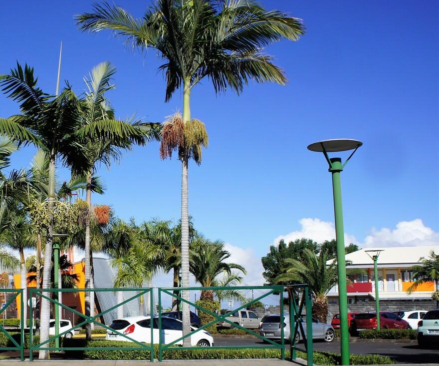 Le Tampon : Parc des palmiers (5/7) -