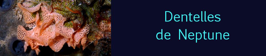 Dentelles de Neptune
