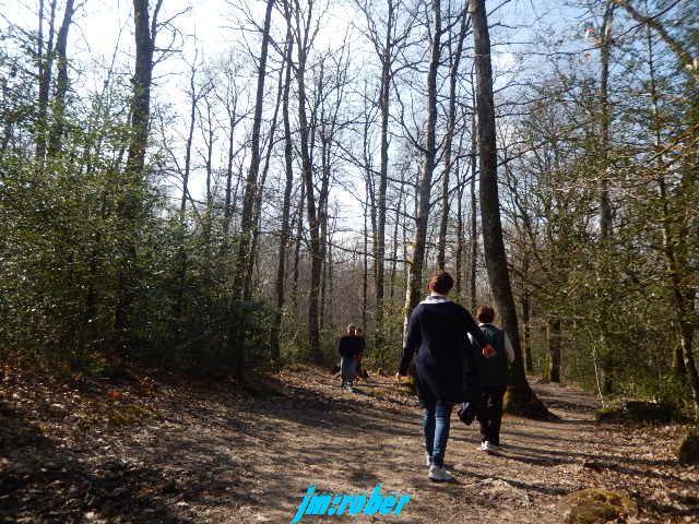 Notre randonnée pédestre en forêt ce dimanche
