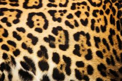 Les mathématiques chez les animaux