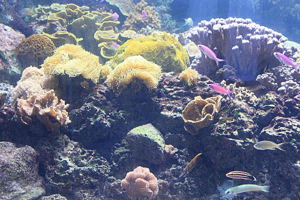 fond marin aquariumLR39