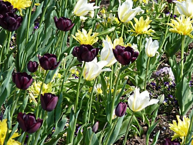 Metz fleurs d'été 12 mp1357 2011