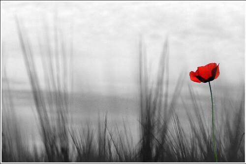 8 novembre au 11 novembre 2014 - Hommage aux combattants