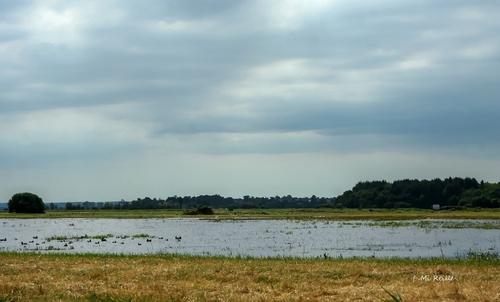 Marais de Carentan avec la Rosée du soleil