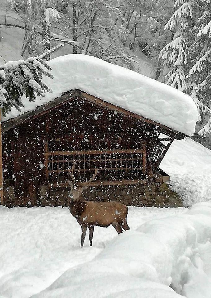 photo prise à Val de Pejo - Italie